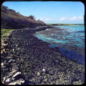 Mull-coast