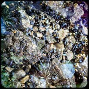 Mull-double-seaweed