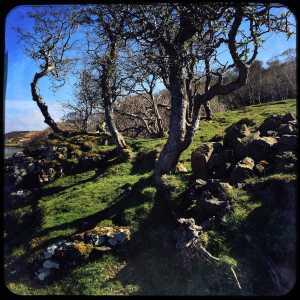 Mull-tree