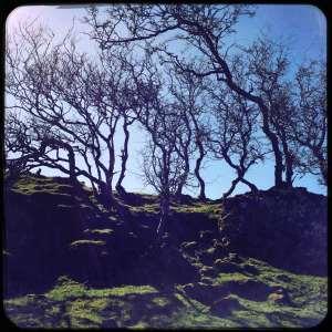 Mull-trees