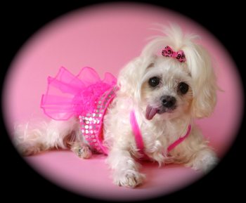 DOLLY-TUTU-Dolly's-interview